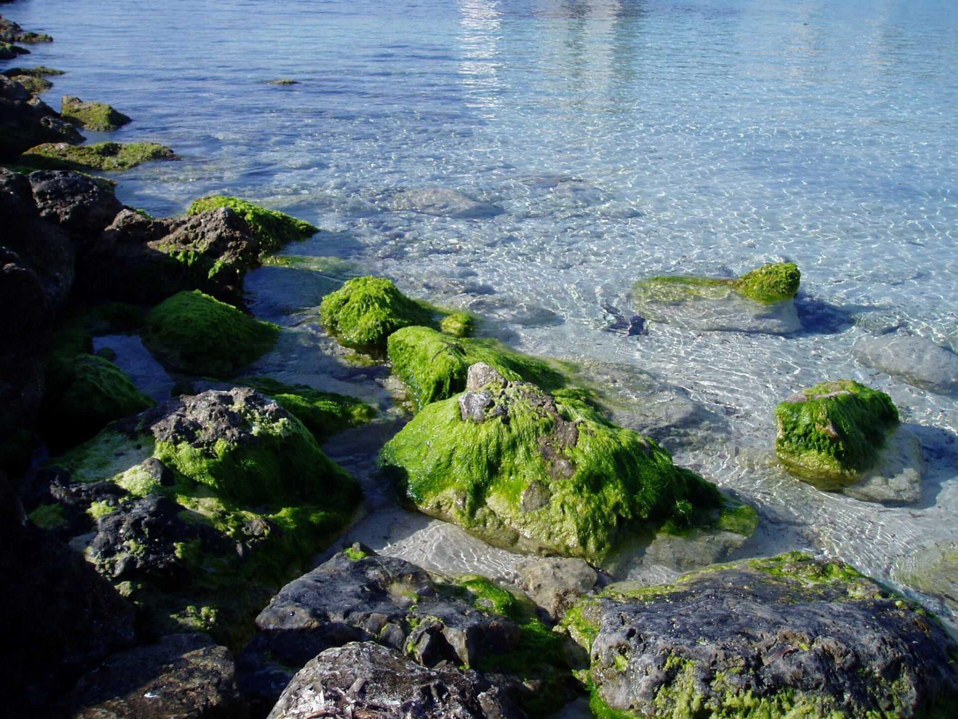 Krönika: Medelhavets framtid är Mallorcas