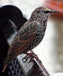Krönika: Nyfiken på – Fåglar!
