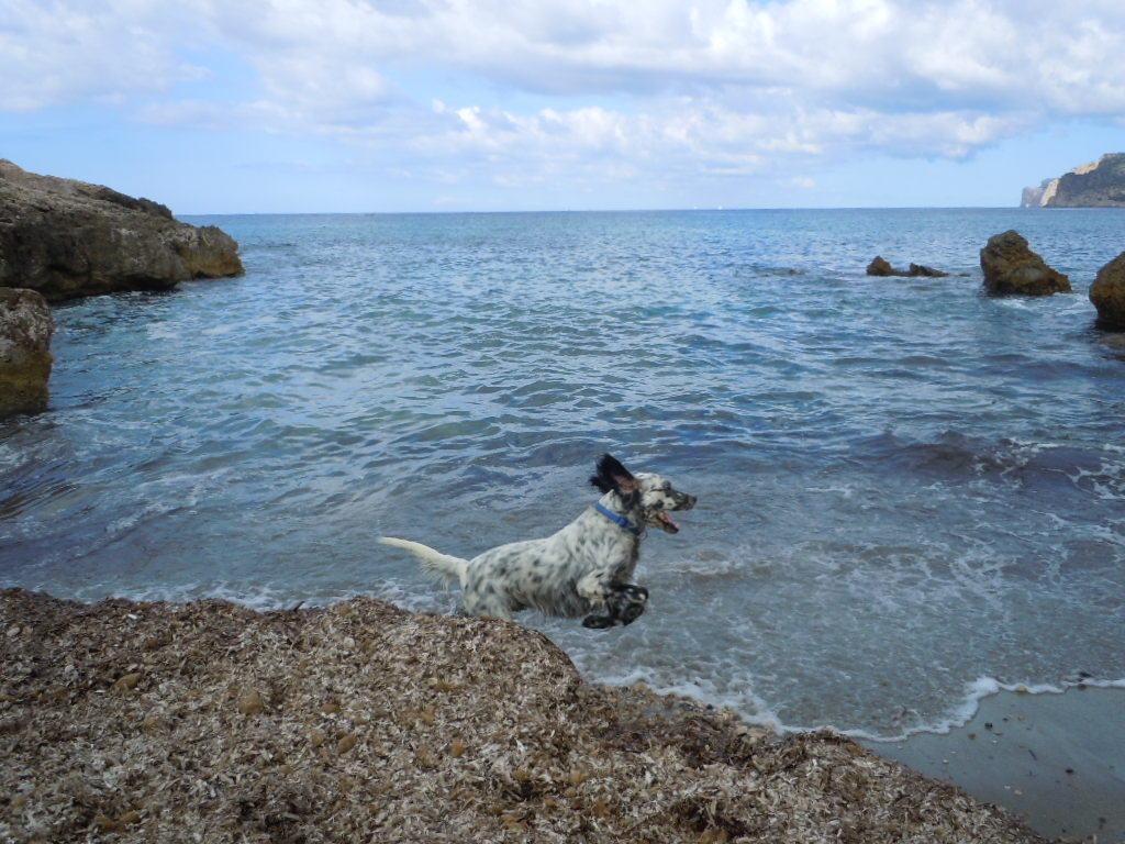"Med hund i ""Costa de la Calma"""
