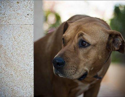 Olydiga hundägare jagas i Palma