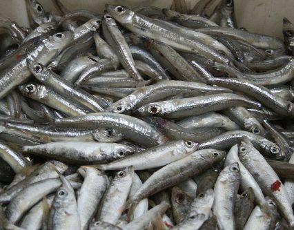 Krönika: Mer fiskar på Mallorca