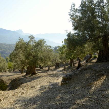 Krönika: Vandring till Deià