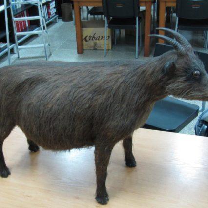 Krönika: Djur som fanns på Mallorca