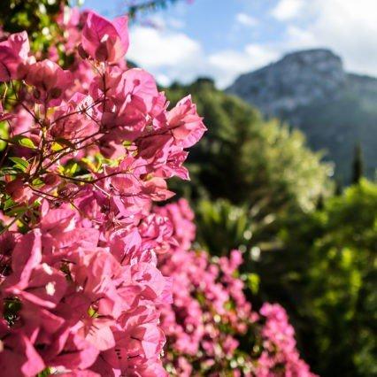 Vad händer på Mallorca i mars-april?