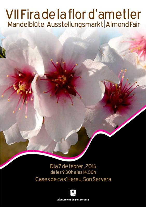 På söndag (7 februari) är det dags för mandelblommorna i Son Servera