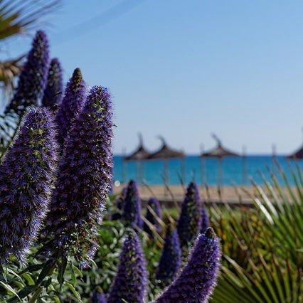 Turismen på Mallorca – mars