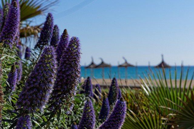 I mars kom 284.525 utländska turister till Balearerna - en ökning med 27,0 procent