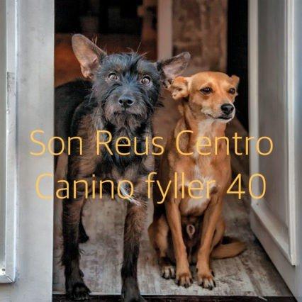 Son Reus Centro Canino fyller 40 år