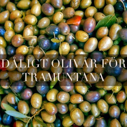 Dåligt olivår för Tramuntana