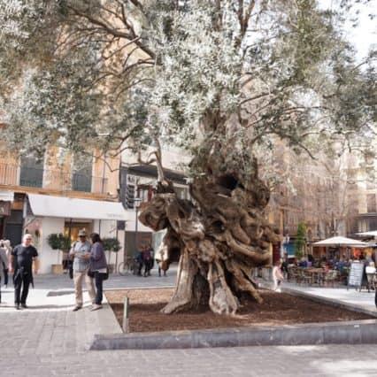 Plaza Cort i Palma